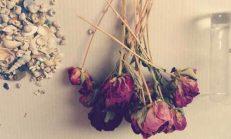 Kurumuş Çiçekler Nasıl Değerlendirilir?