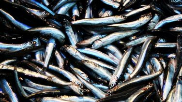 Artan Balık Nasıl Değerlendirilir?