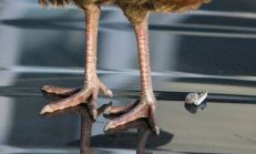Kuş Pisliği Nasıl Temizlenir?